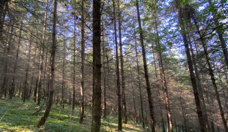 Forêt à vendre Douglas