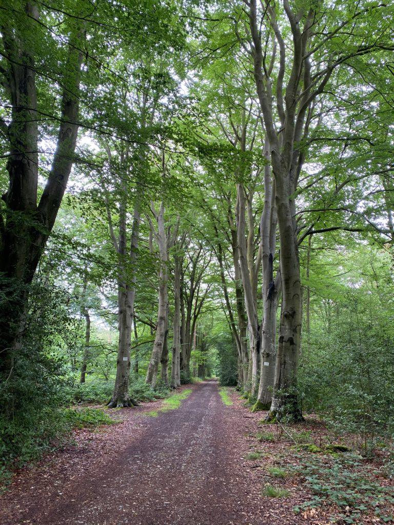 Bois de hêtres en Normandie