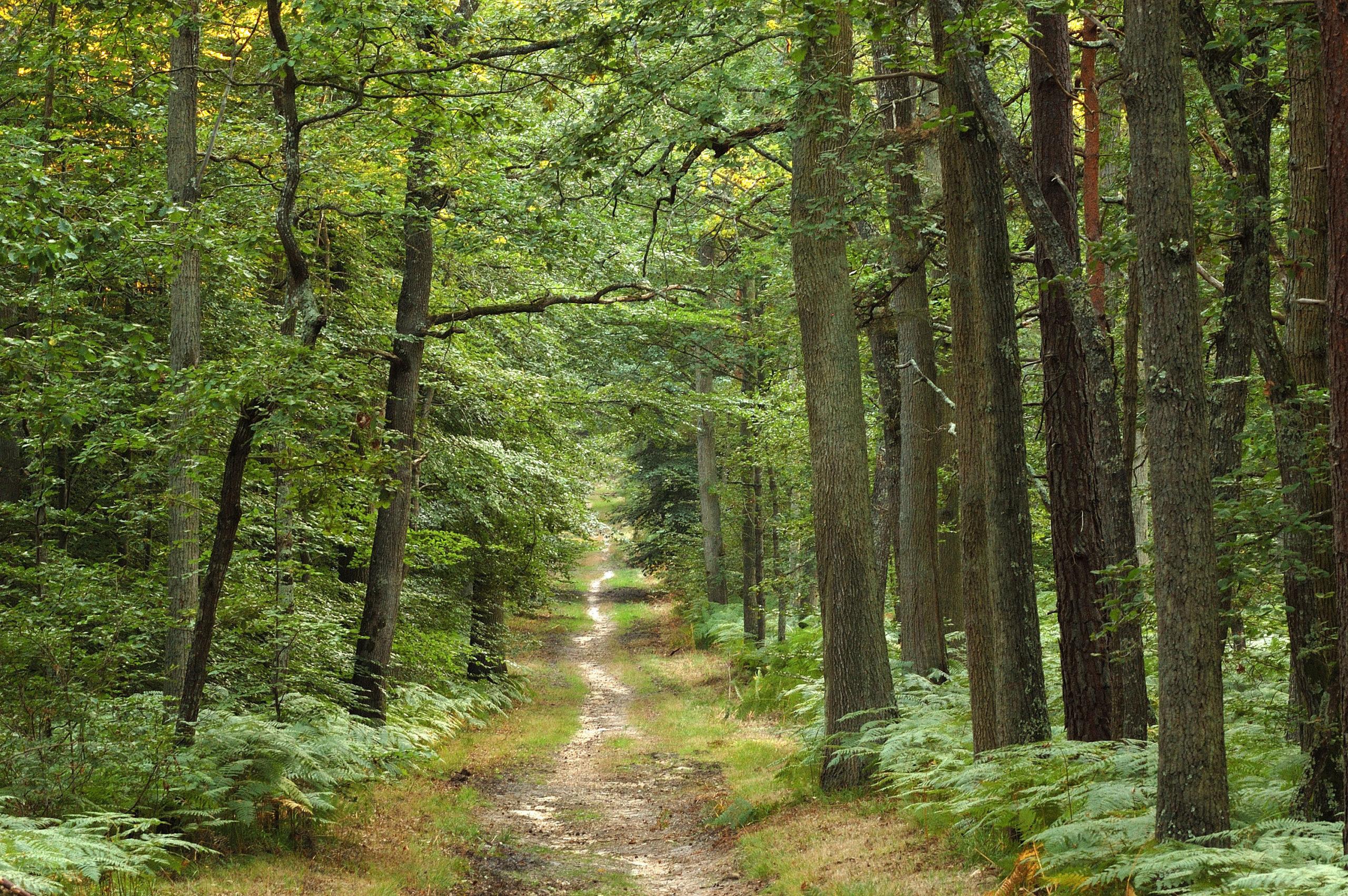 Vente forêt dans le Calvados