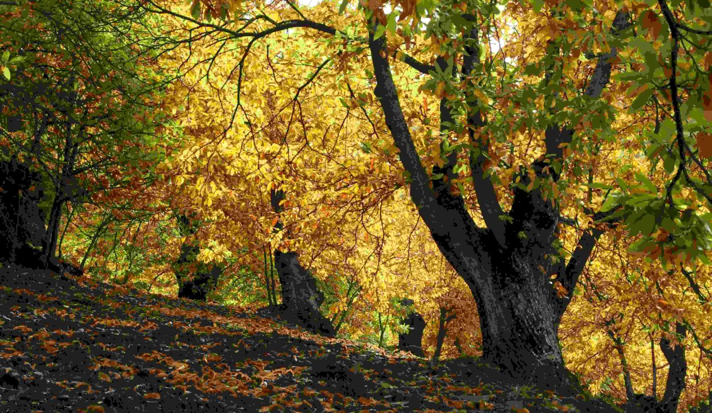 Forêt à vendre Châtaigniers
