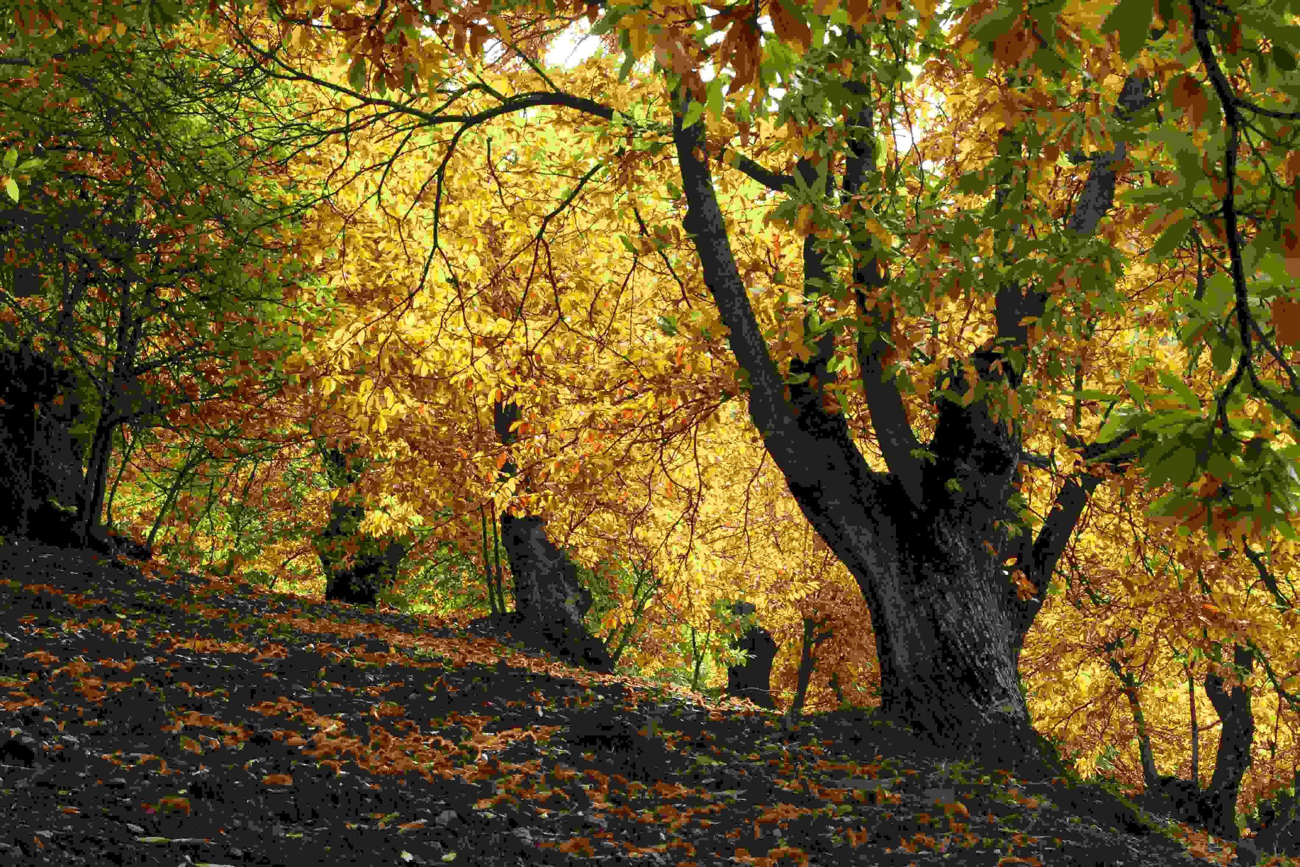Forêt de châtaigniers à vendre en Corrèze