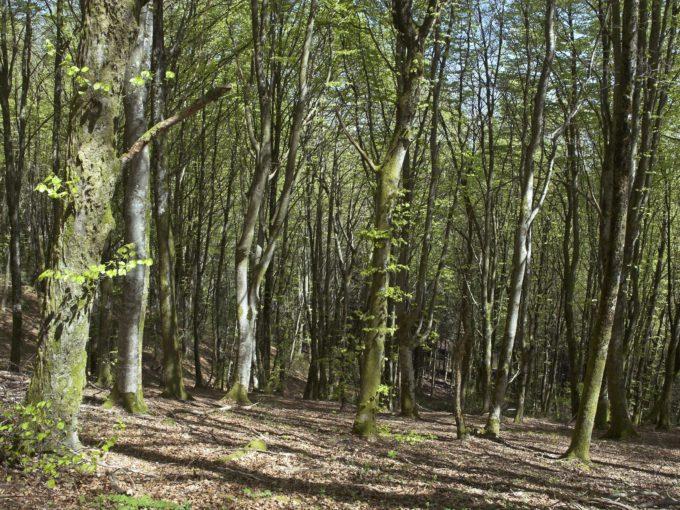 Forêt à vendre Hêtres