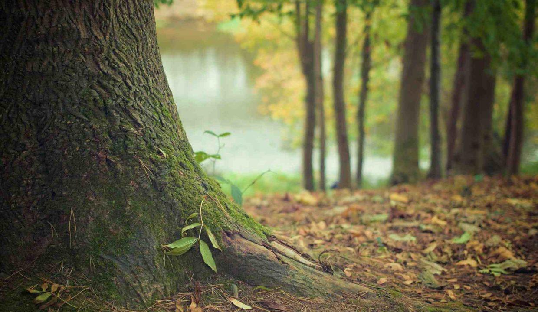 Forêt de feuillus en vente