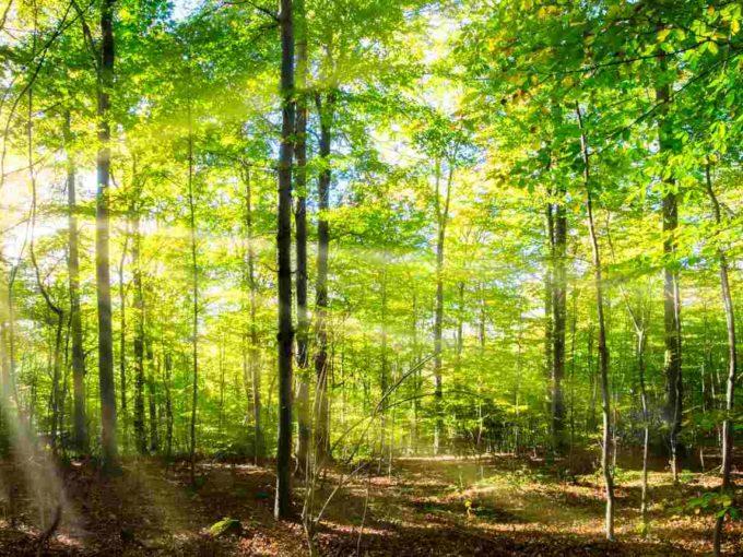 Forêt à vendre Chênes