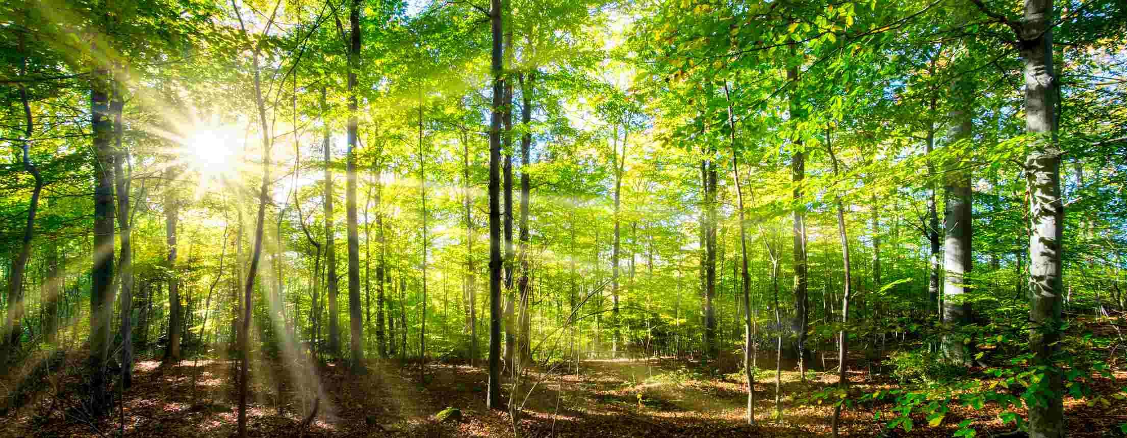 Forêt de chênes à vendre en Corrèze