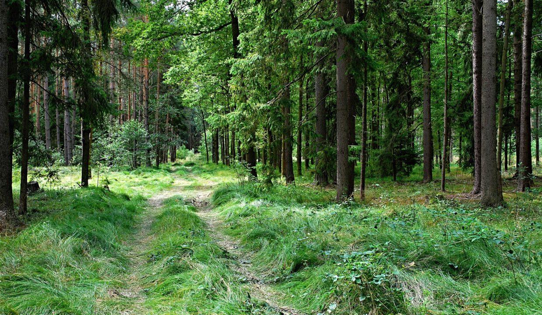 Vente forêt Epicéas