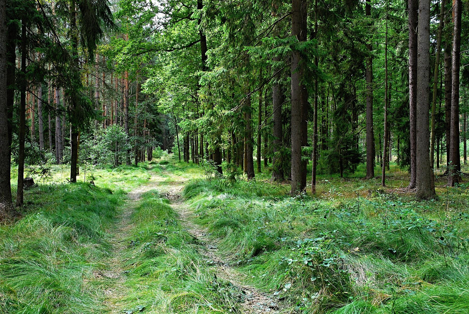 Forêt à vendre Epicéas en Corrèze
