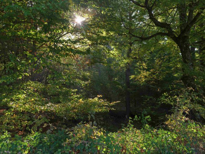 Forêt de Chênes à vendre