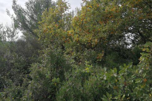 Bois à vendre Hérault