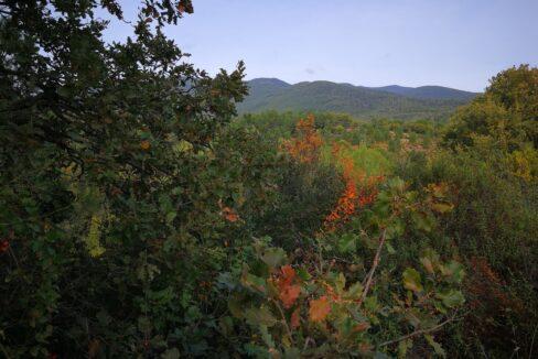 Forêt à vendre Hérault