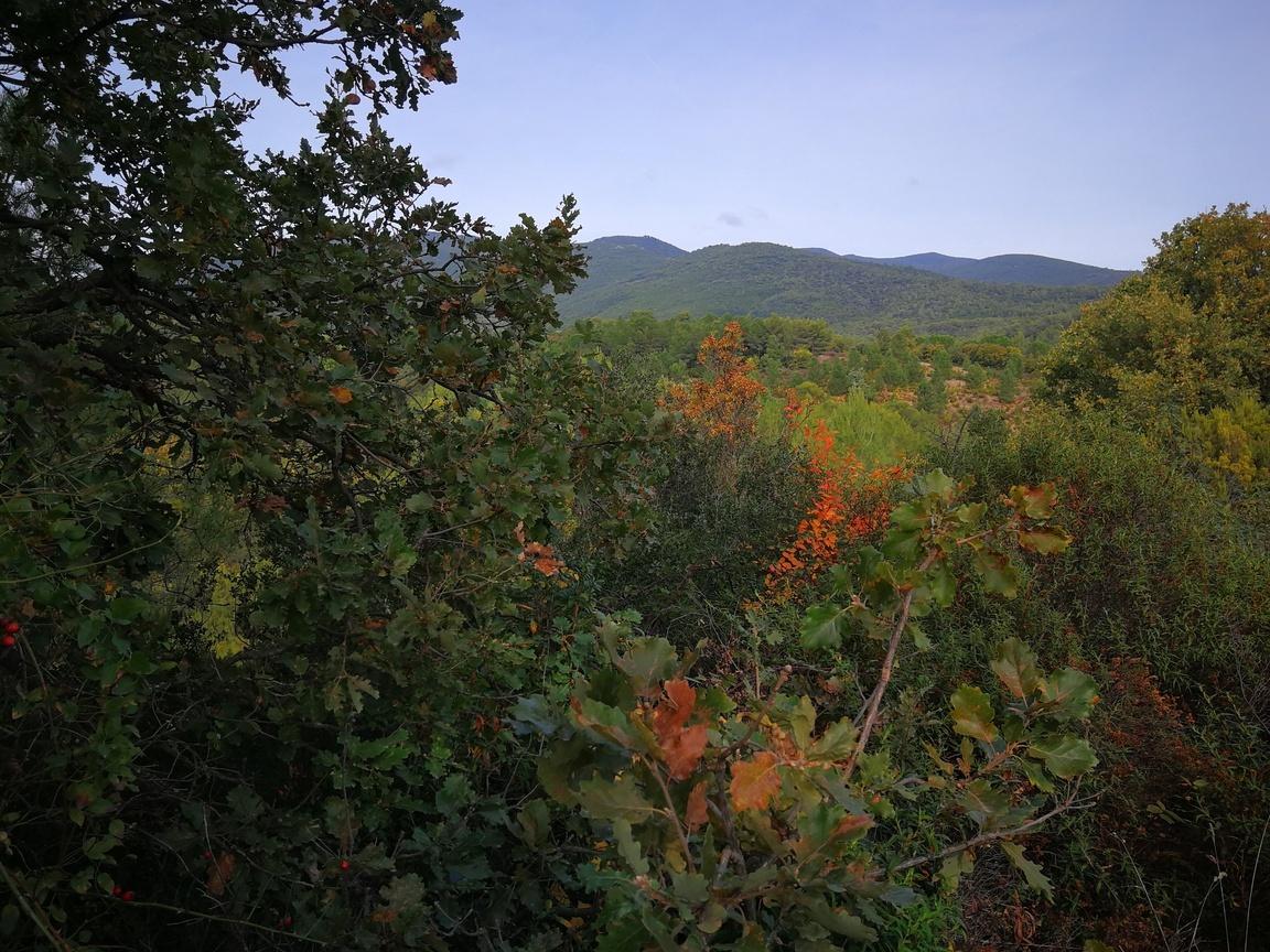 Parcelle de bois et forêt à vendre dans l'Hérault (Saint-Chinian)