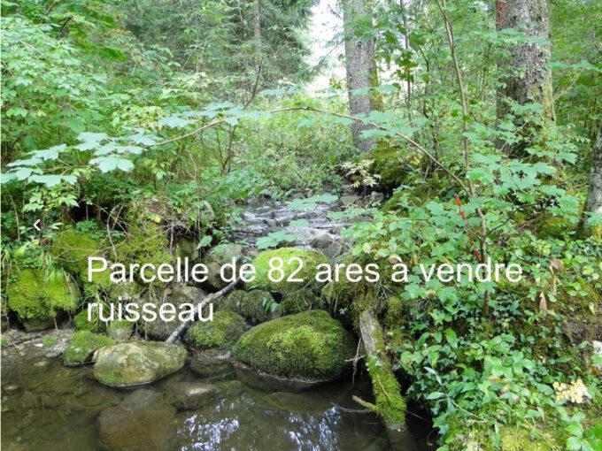 Parcelle de bois avec Ruisseau dans la foret du Haut Jura – A sai1