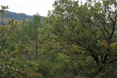 Propriété Forestière à vendre Hérault