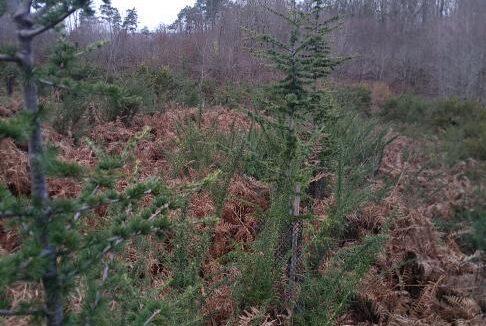 Forêt à vendre Dordogne 2