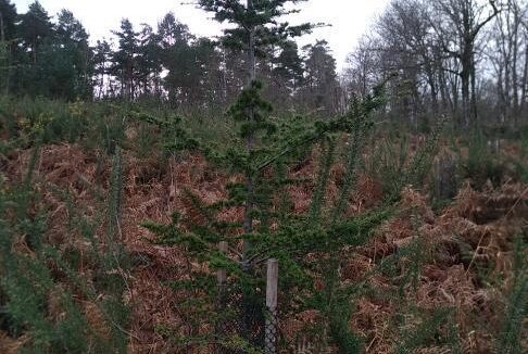Forêt à vendre Dordogne 3
