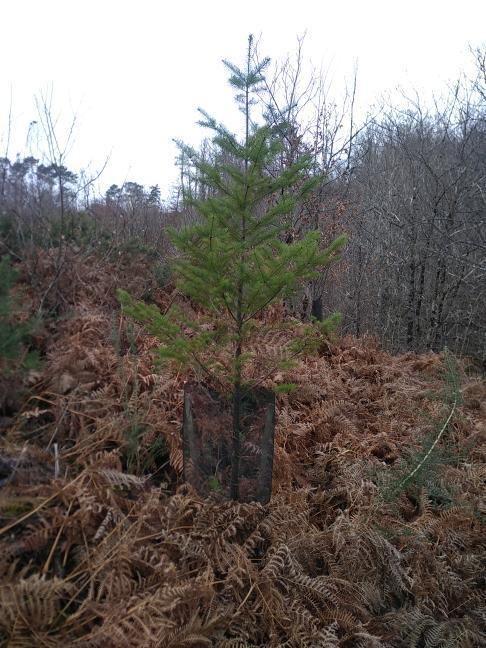 Forêt à vendre Dordogne 4