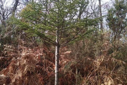 Forêt à vendre Dordogne