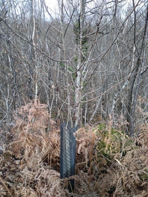Forêt à vendre Dordogne 5
