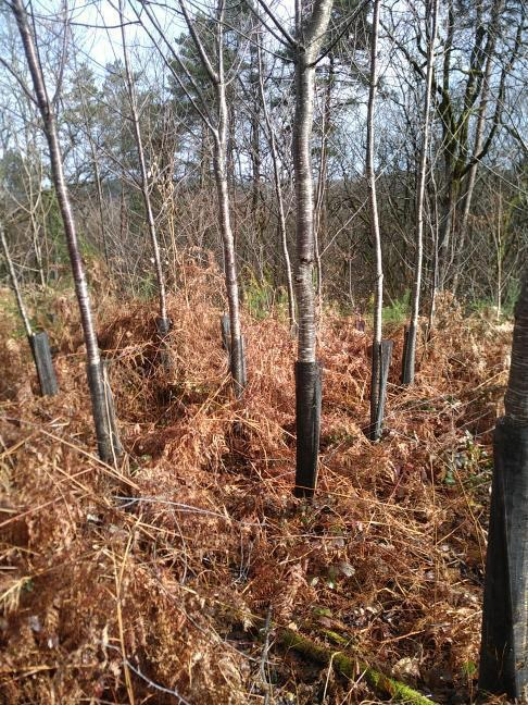 Forêt à vendre Périgord 3
