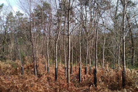 Forêt à vendre Périgord 4