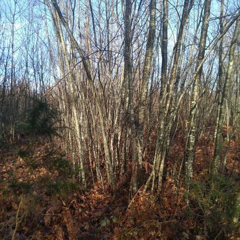Forêt à vendre Périgord