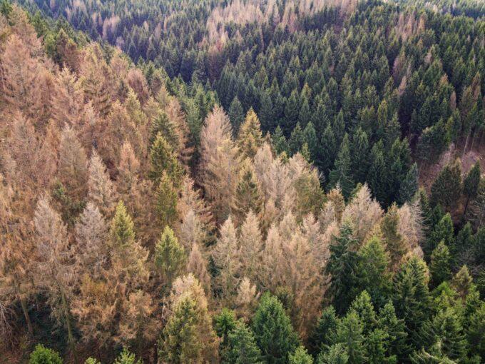 Forêt et changement climatique