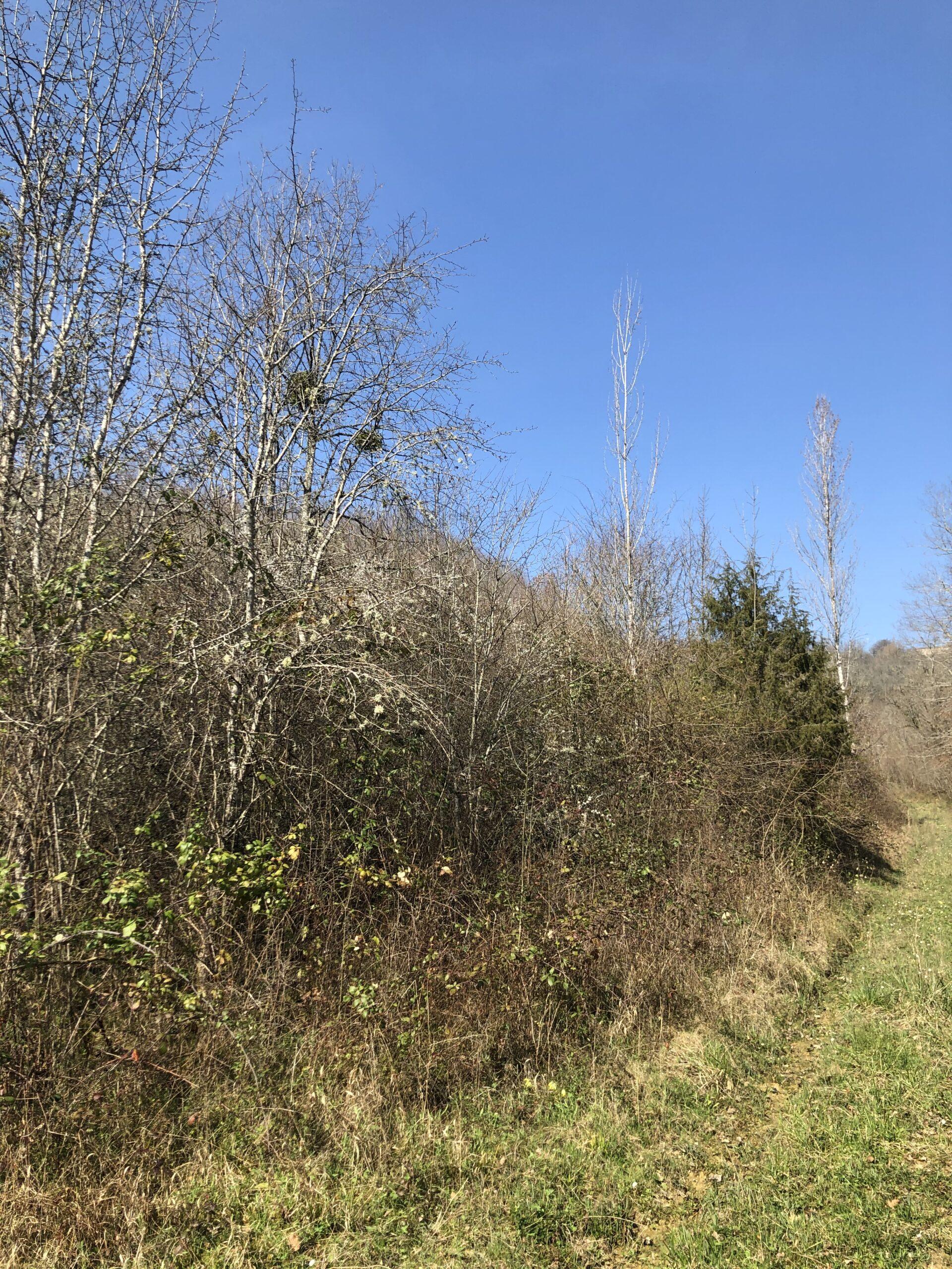 Jeune forêt feuillue dans le Tarn et Garonne Réf 09