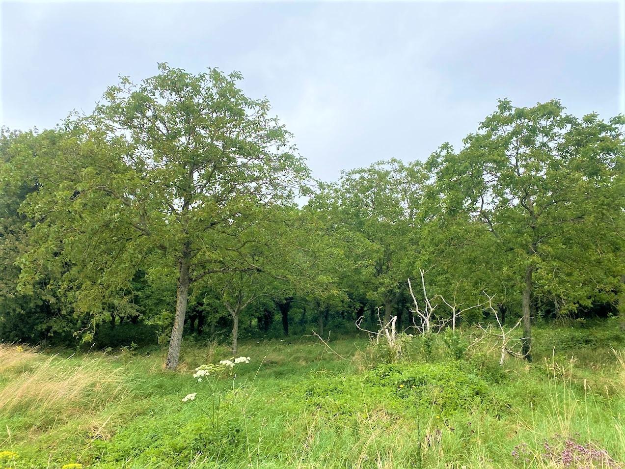 Plantation de Noyers